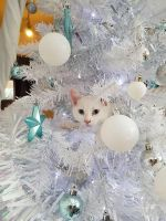 Christmas is for cats by Chri8