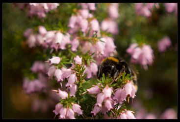 Bumble by Boolean121