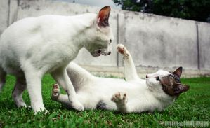 Meji and Milo, Fighting... by adrianhefni