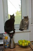 Cats and apples by mprangenberg