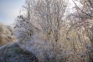 Frozen II by Life-For-Sale