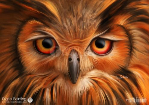 Owl by ipawluk