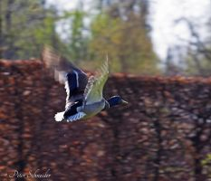 Busy wing beat. by Phototubby