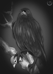 Deeper (little study of crow) by Amolitacia