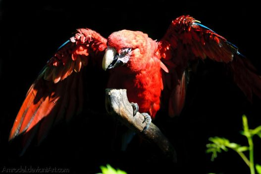 Green-winged Macaw by amrodel