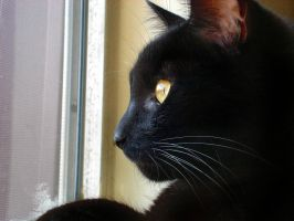 Reflections of a cat's eye by raverqueenage