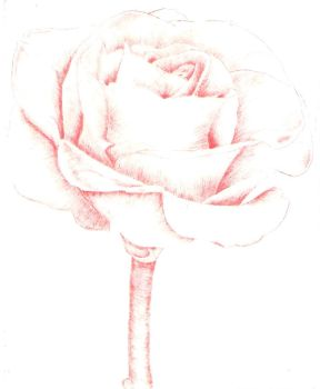 Intaglio Red Rose by MoonlightRomance16