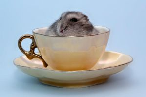 A hamster in a cup by ErikTjernlund