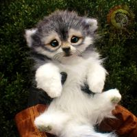 Sold, Poseable Baby Wolf Pup! by Wood-Splitter-Lee
