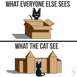 Every Cat Loves Cardboard Boxes by Giorgio-Barresi