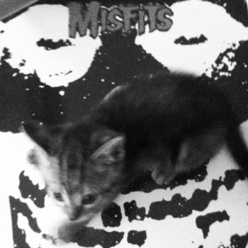 Misfits Cat by HamletTheDetective