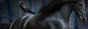 HOX-banner by Charmed-Studios