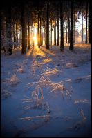 Cold winter morning by mjagiellicz