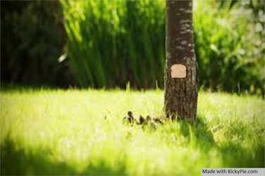 Bread stapled to a tree in the grass by KickyPie