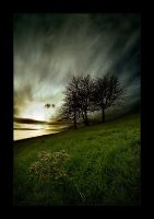 One tree and three trees hill by Pederklev