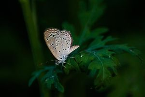 Butterfly by DebasishPhotos