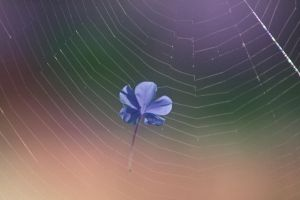 Flower Web by SunOwl