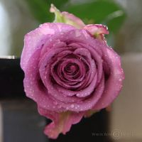 For you II... by WhiteBook