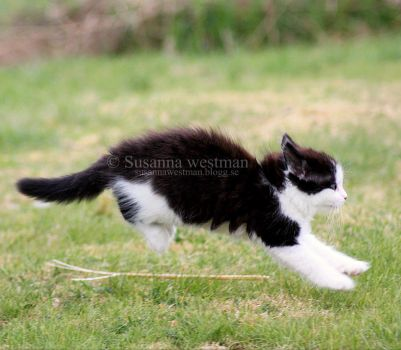 Flying kitten? by PhotographySW