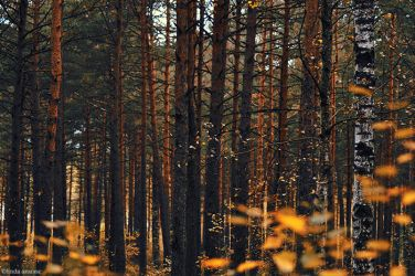 autumn in the forest by LindaMarieAnson