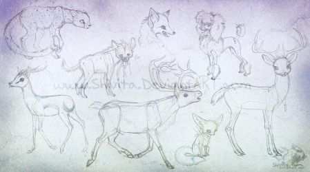 Animal anatomy practice by Shivita