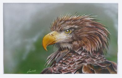 Whitetailed Eagle by neanderdigital