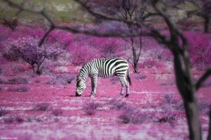 Once Upon a Time in Kenya - 7 by BenHeine