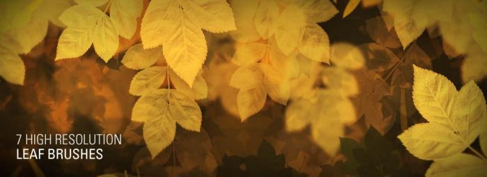 7 High Resolution Leaf Brushes by johannschill