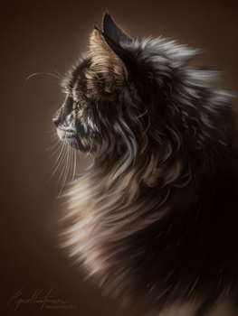 Cat Study by Imaginary-Rat