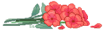 - Flowers by sigulary