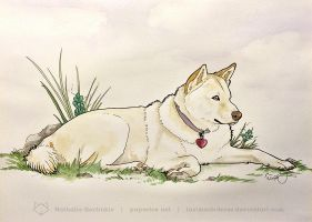 Lil Jindo Pet Portrait by art-paperfox