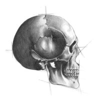 skull sketch by ashdesigns
