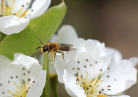Early Mining Bee by S4MMY4RT