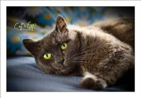 Cat's Eyes by sG-Photographie