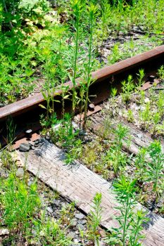 Beauty In the Railroad by stevephotography