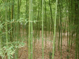 Bamboo Grove by lockstock