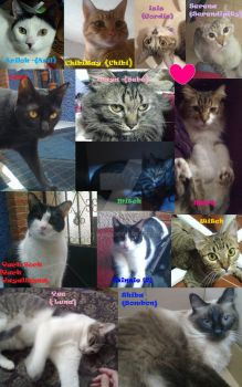 My cats 2013 Only Spanish by Ray-Wind