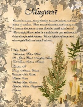 Book of Shadows: Herb Grimoire - Mugwort by CoNiGMa