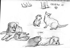 cats - dogs by therealarien
