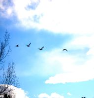 birds on the wing by Pendragon-007