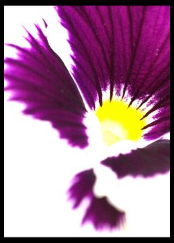 Flower by tpphotography
