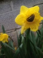 Daffodilling snail vers 1 by InexplicablyIris