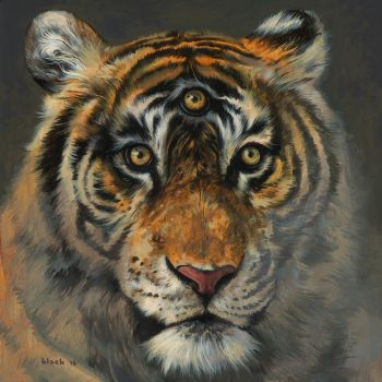 A Wise Tiger by stevenrussellblack