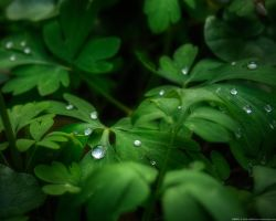 Drops by realityDream