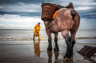 Fishing in shrimps on by horse to Oostduinkerke by Laurent-Dubus