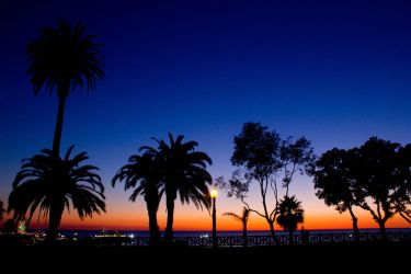 Palm trees in Santa Monica by ChloeGPhotography