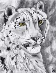 Snow leopard by inuyasha666hiei