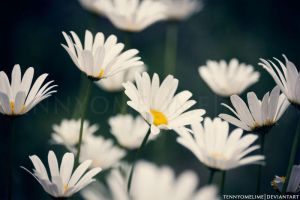 Daisies 001 by tennyomelime