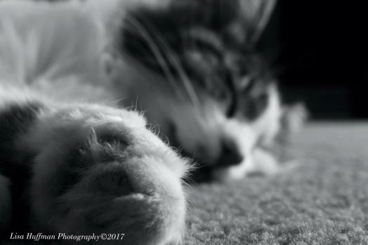 Jelly bean toes nap by lisahuffman2001