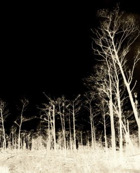 The sky is dark and trees glow by unlikemonday